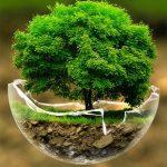 کسب و کار سبز رویکردی برای تولید ثروت